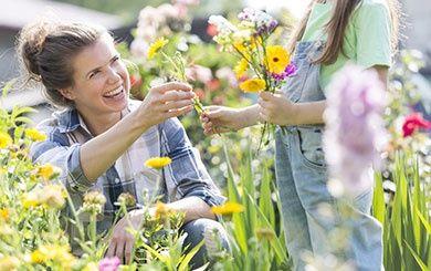 une fleur utile aux pollinisateurs le coquelicot kit 3 g de graines engrais chromo fiche. Black Bedroom Furniture Sets. Home Design Ideas