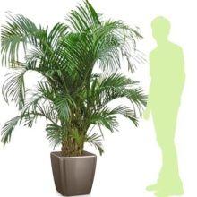 plante verte grande