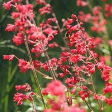 fleurs floraison estivale