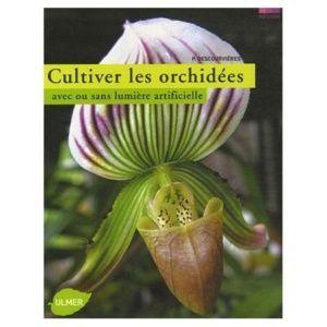 Cultivez les orchidées avec ou sans lumière artificielle