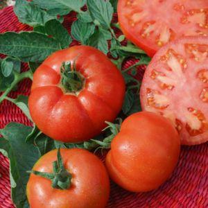 Tomate 'Saint-Pierre'