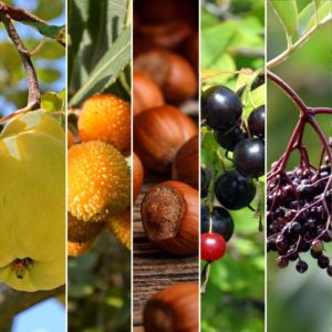 Kit de haie fruitière originale composée de 8 arbustes