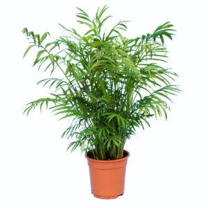 Toutes nos plantes vertes - Gamm Vert b0cf926ae96