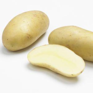 Semer des graines de pommes de terre gamm vert - Quand semer les pommes de terre ...