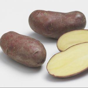 Pomme de terre 'Chérie'