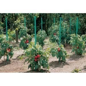 Tuteur tomate à réserve d'eau - H 150 cm - Intermas Celloplast