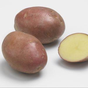 Pomme de terre 'Désirée'