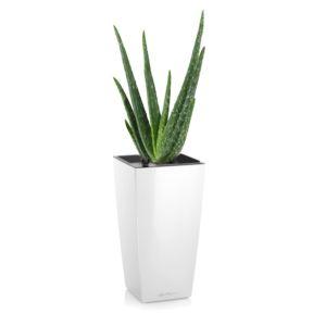 plantes grasses entretien origine culture gamm vert. Black Bedroom Furniture Sets. Home Design Ideas