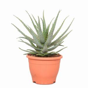 Toutes Nos Plantes Fleuries D Interieur Gamm Vert