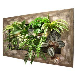 Cadres végétaux, tableaux végétaux et compositions - Gamm Vert d2ea1d4f2a6