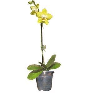 Faire Refleurir Une Orchidee Gamm Vert