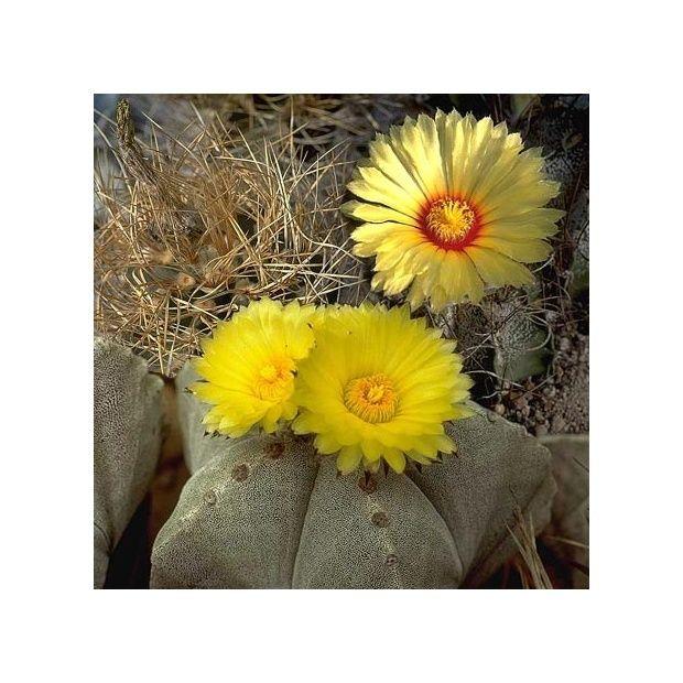 toute variete de cactus
