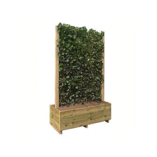 Haie de Lierre \'Woerner\' MOBILANE® en jardinière, hauteur 2m20 ...