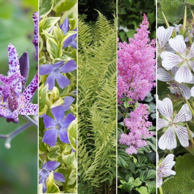 Kit de vivaces jardin d 39 ombre lot de 15 godets de 7 cm gamm vert - Plantes ombre exterieur nord ...
