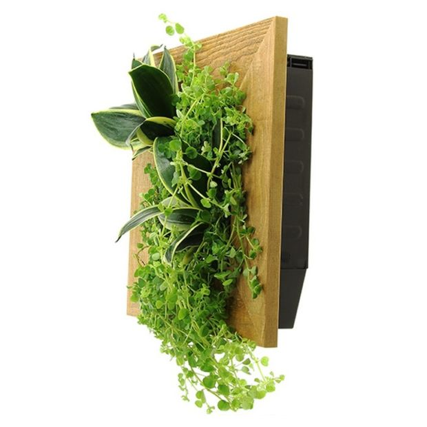 cadre v g tal wallflower kyoto vieux bois s taille s 31x31x15 cm avec kit de fixation gamm vert. Black Bedroom Furniture Sets. Home Design Ideas