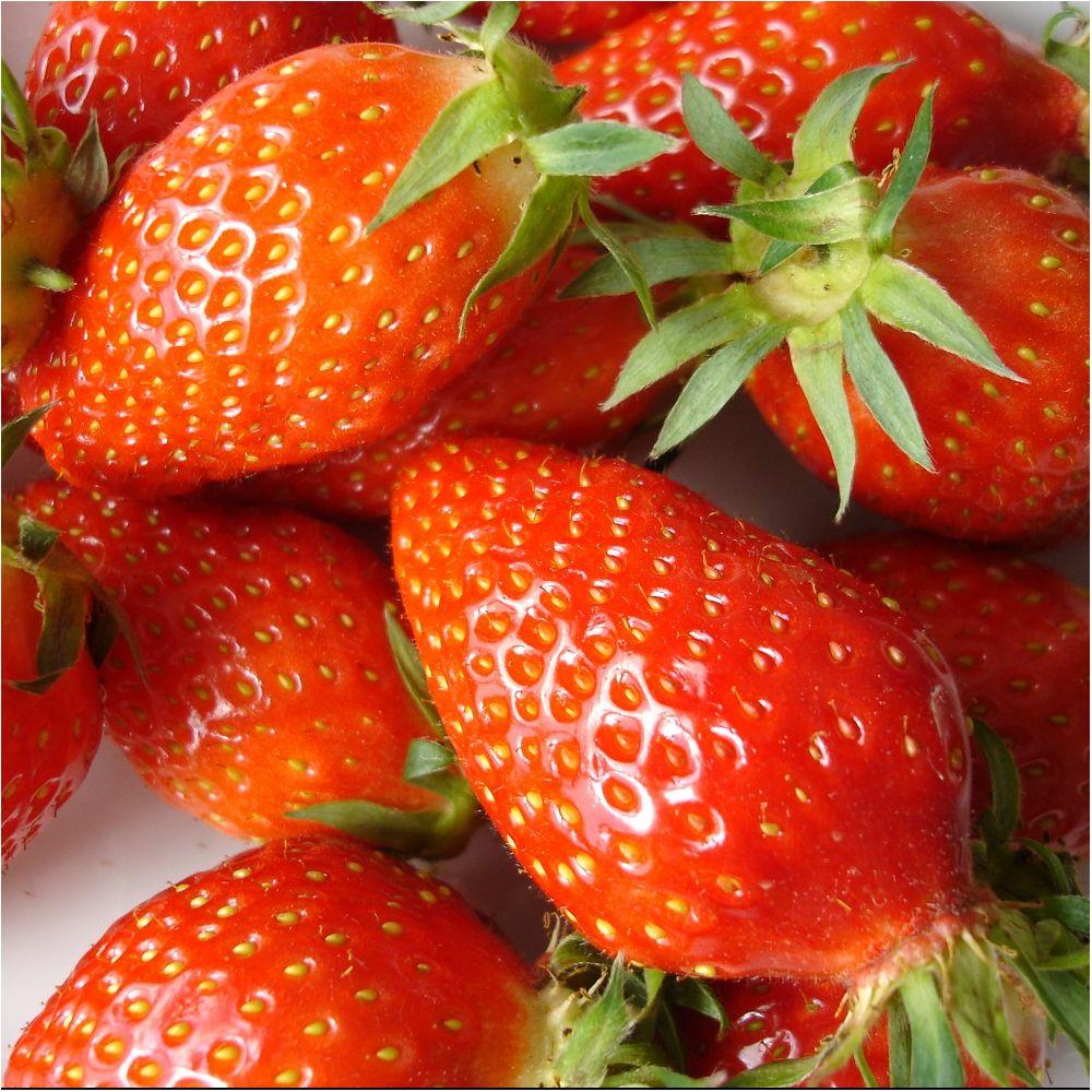 ou planter fraisier gariguette
