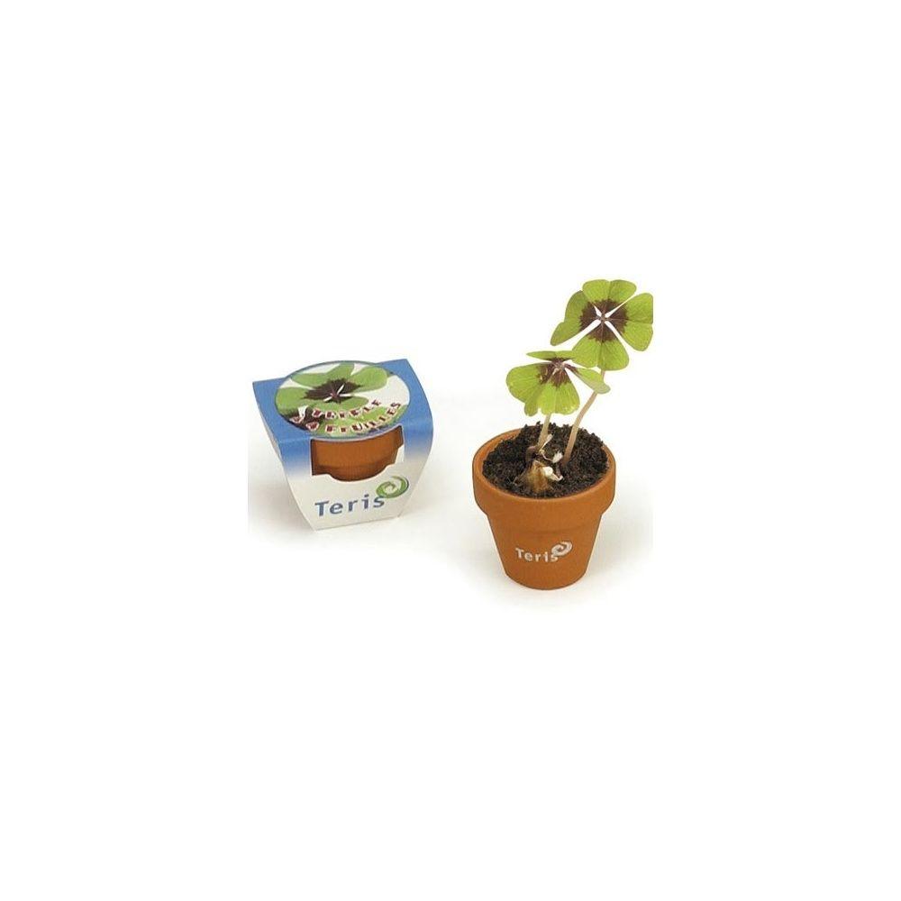 comment planter trefle a 4 feuilles
