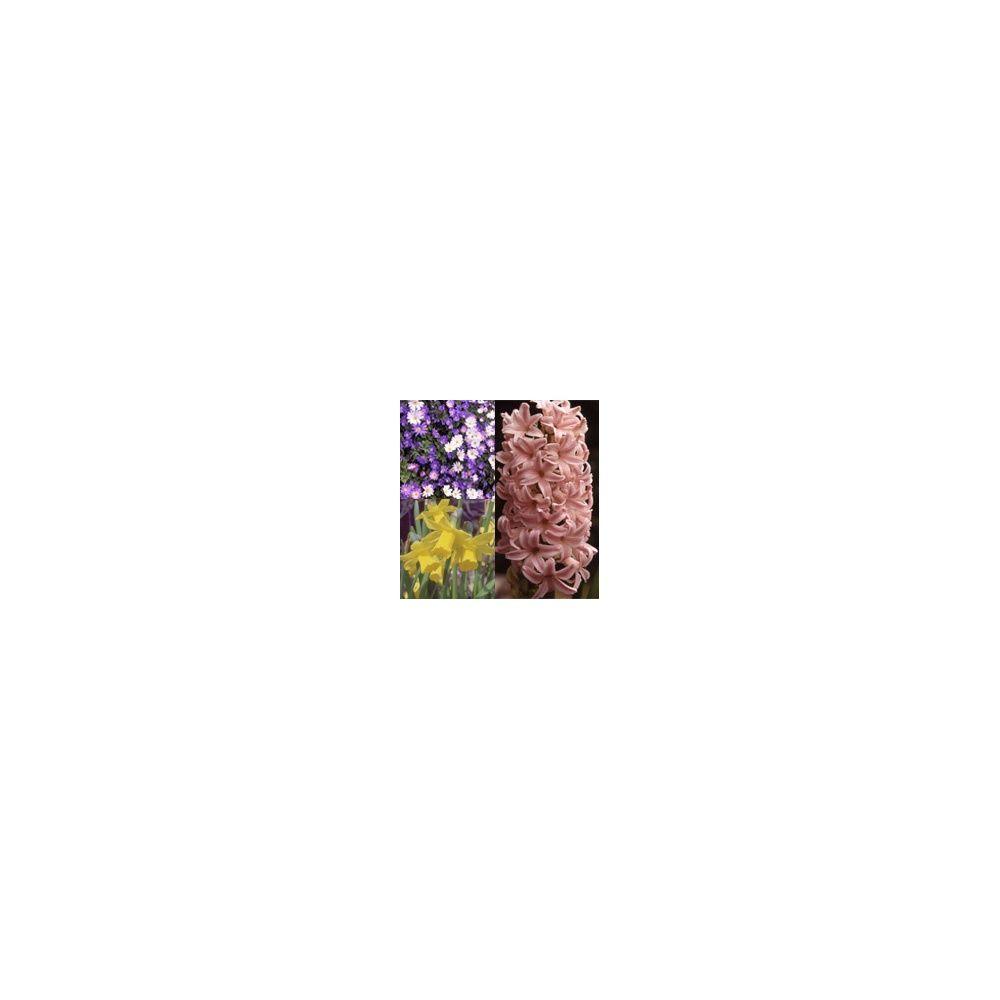 Assortiment vasque ou jardinière Rose Bulbes - Gamm Vert