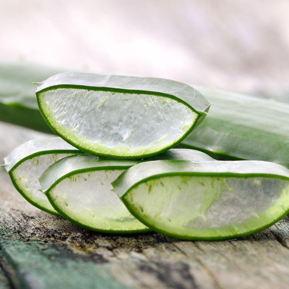 Aloe vera pot de 10 cm gamm vert - Almohadas de viscoelastica aloe vera ...