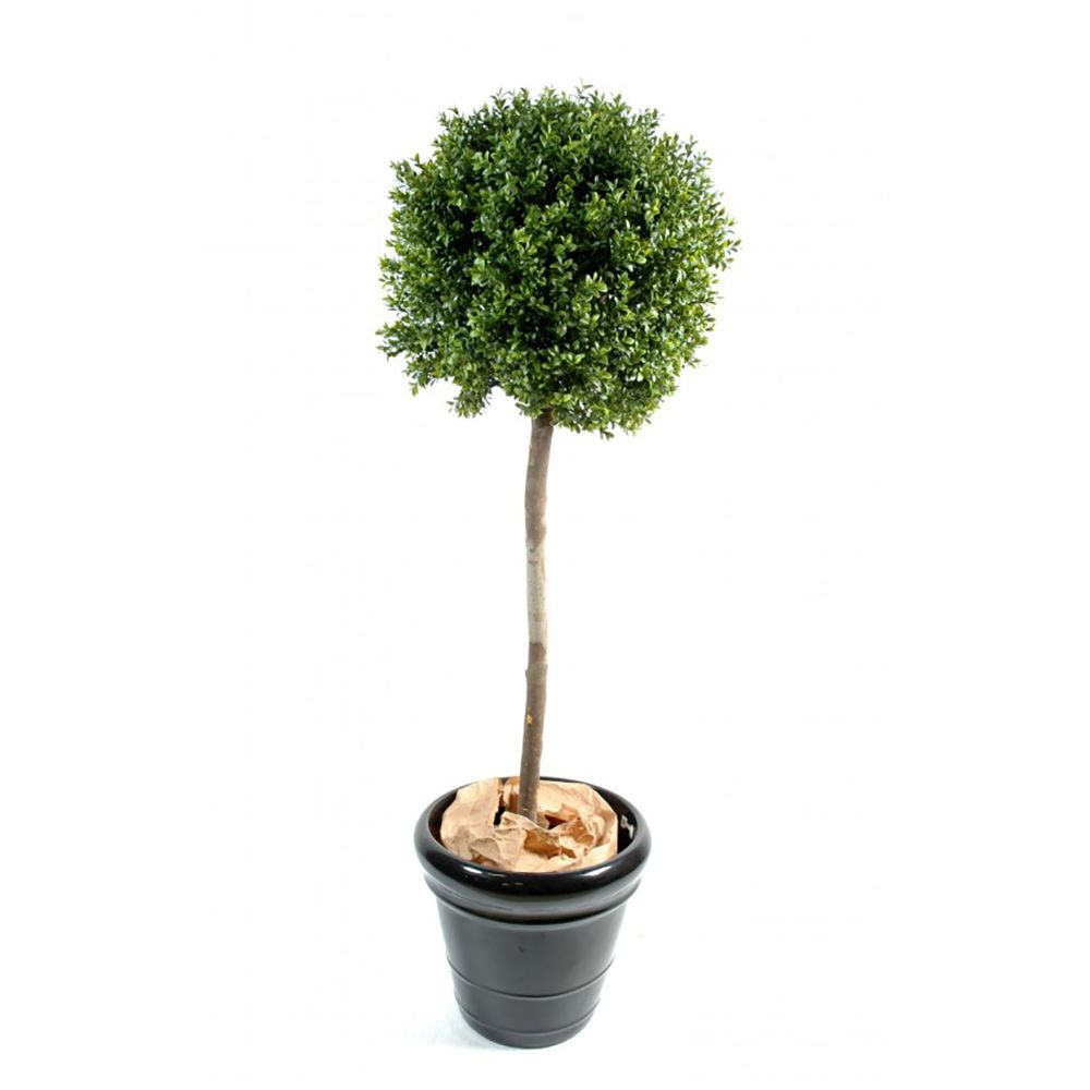 buis boule tige h110cm chaumes naturels feuillage. Black Bedroom Furniture Sets. Home Design Ideas