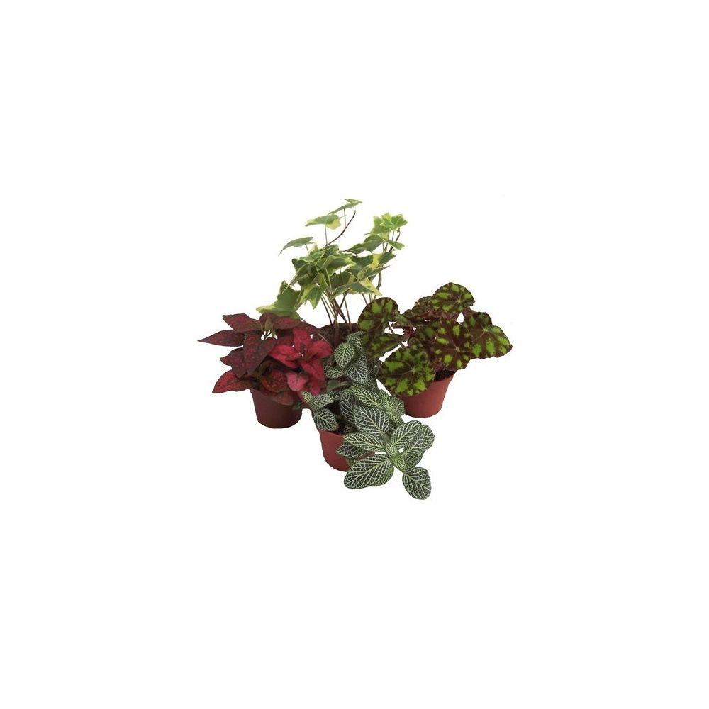 Kit de 4 mini-plantes nuance rouge