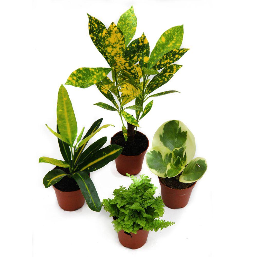 Kit de 4 mini plantes nuance jaune kit de 4 mini plantes for Mini plante verte