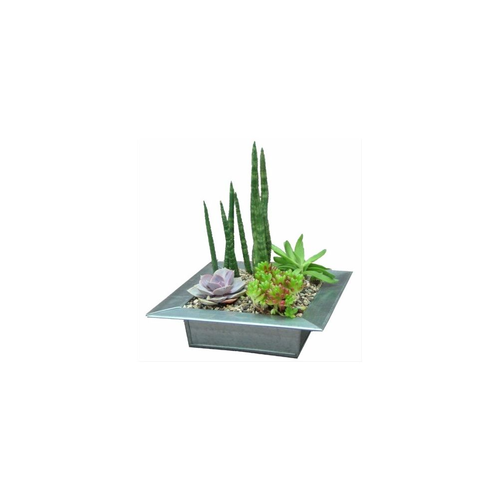 kit composition de plantes grasses + plat en zinc hauteur totale 20