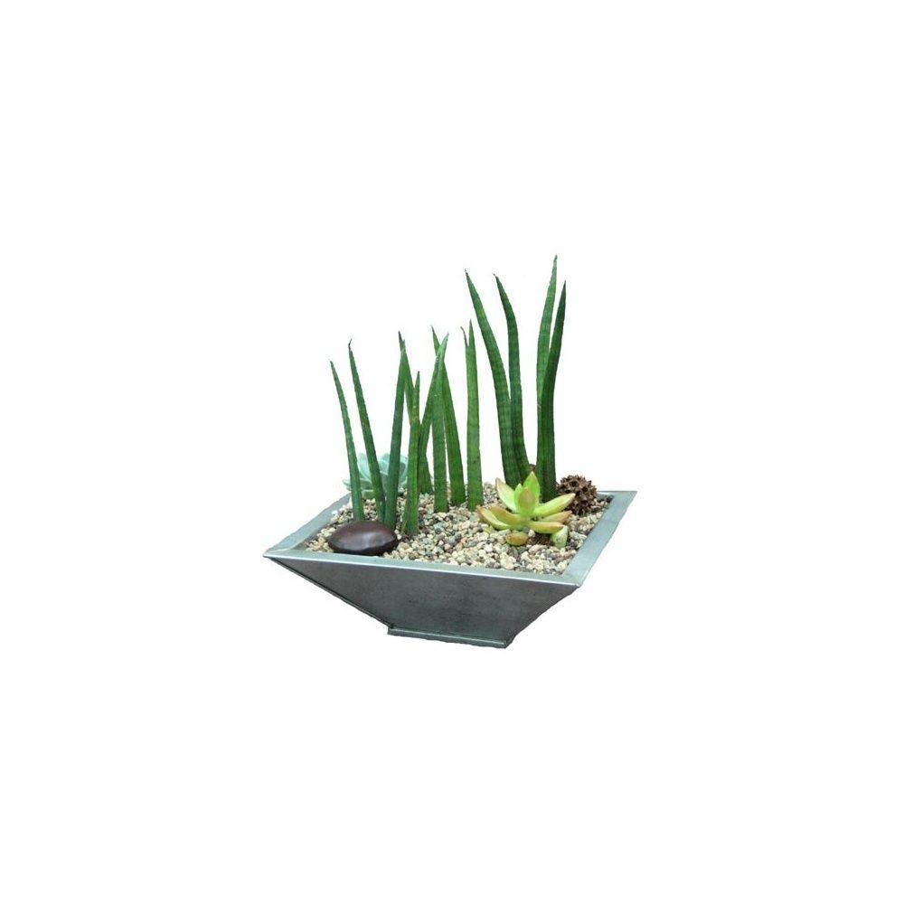 kit composition de plantes grasses plat en zinc vas en kit hauteur totale 20 25 cm pot. Black Bedroom Furniture Sets. Home Design Ideas