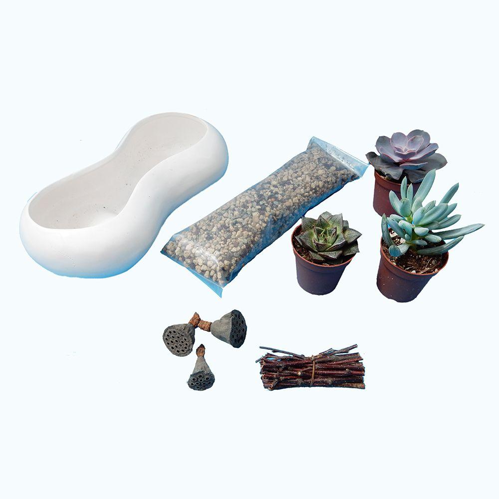 kit composition de succulentes c ramique design hauteur. Black Bedroom Furniture Sets. Home Design Ideas