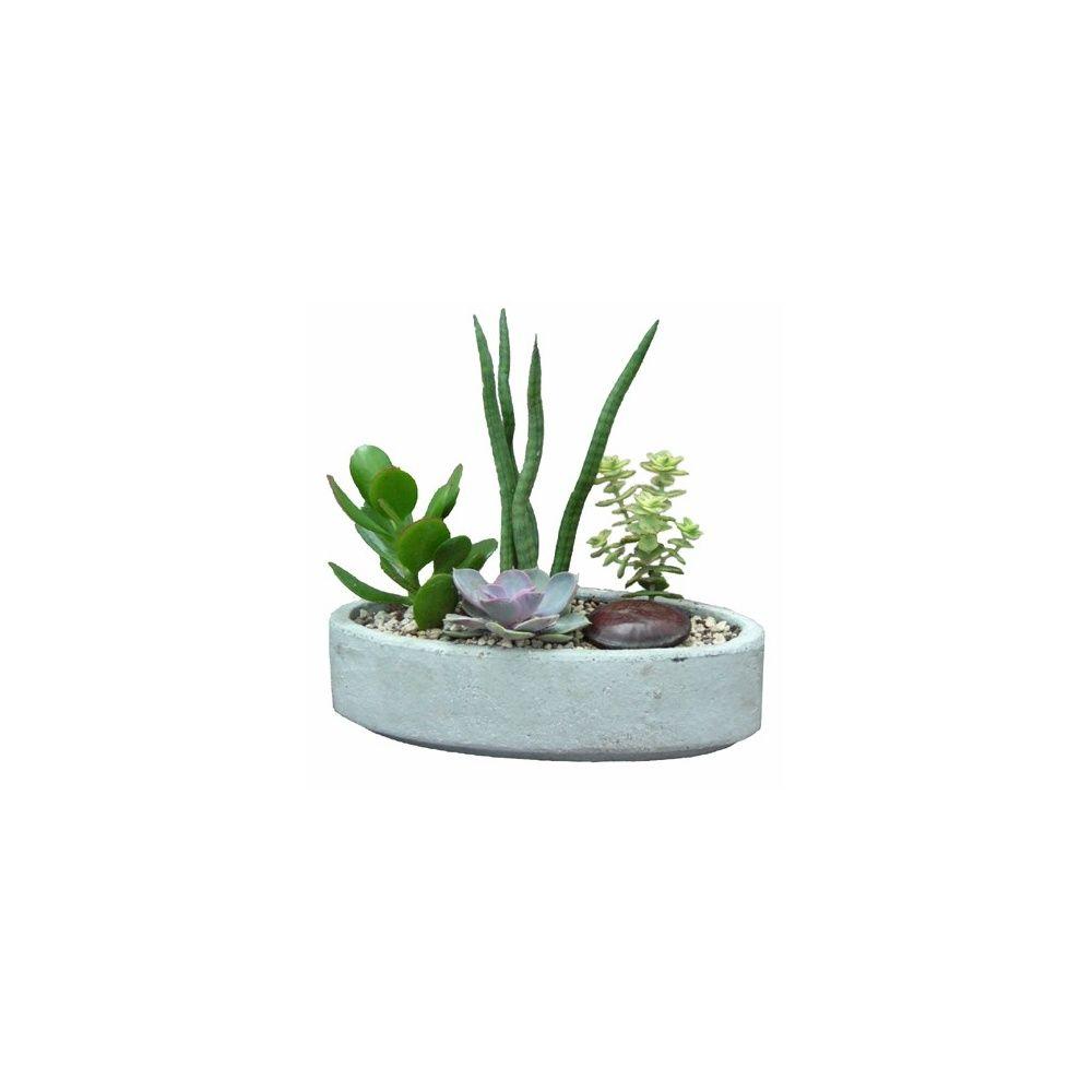 kit composition de plantes grasse pot b ton ovale hauteur totale 20 25 cm pot b ton 22x11 cm. Black Bedroom Furniture Sets. Home Design Ideas