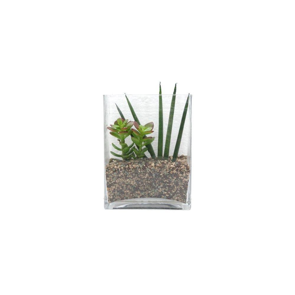 Kit composition de plantes grasses en verrerie hauteur - Composition plantes grasses interieur ...