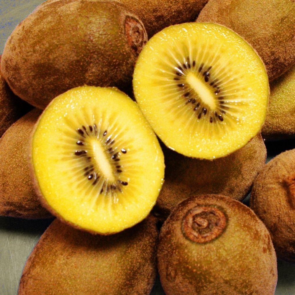 kiwi jaune 'soreli®', pied femelle pot de 1,3 litres - gamm vert