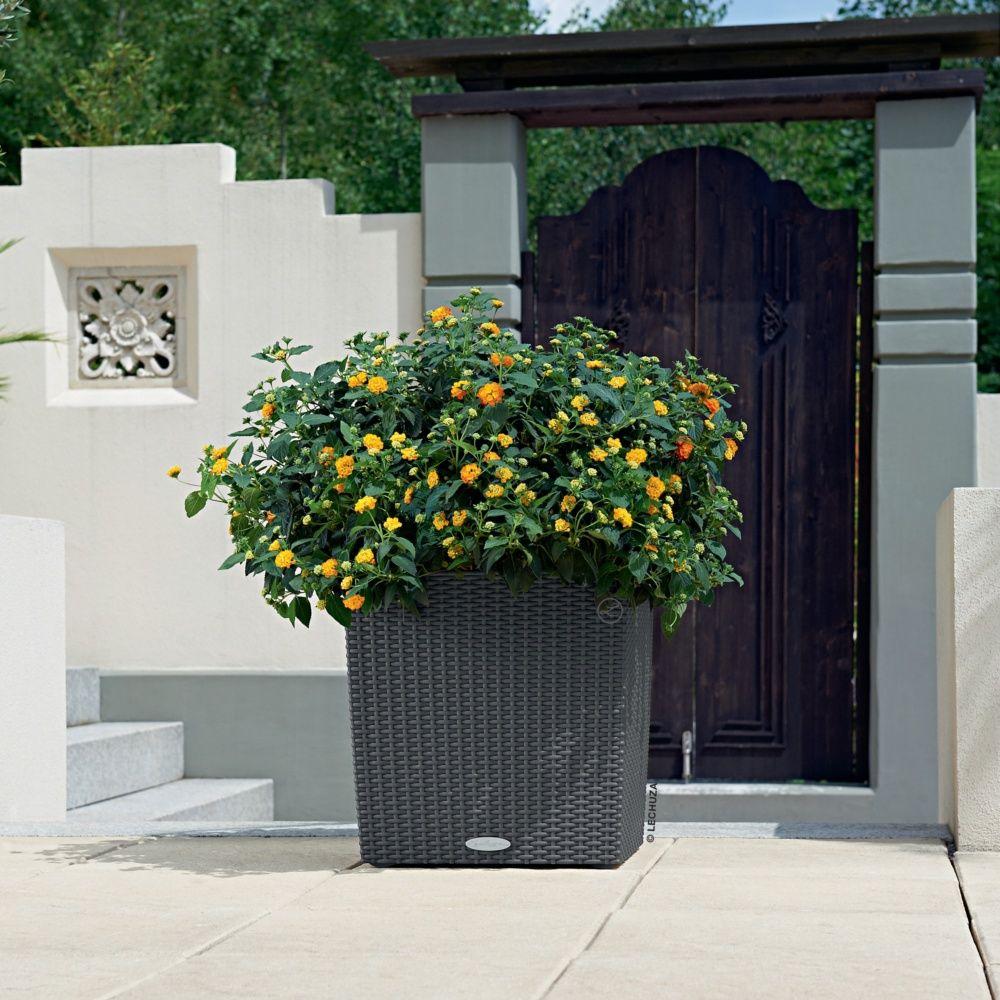 pot lechuza cube cottage l40 h40 cm granit gamm vert. Black Bedroom Furniture Sets. Home Design Ideas