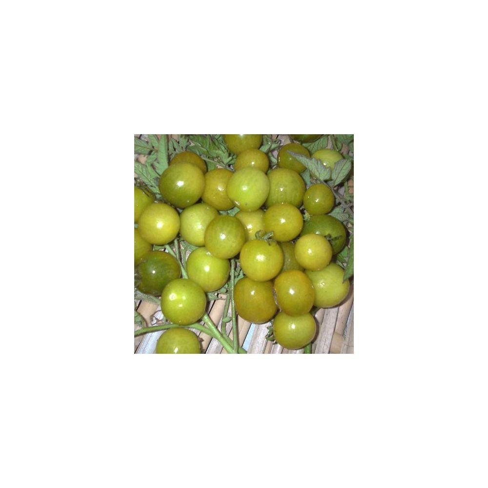 Tomate cerise verte 'Green Grape'