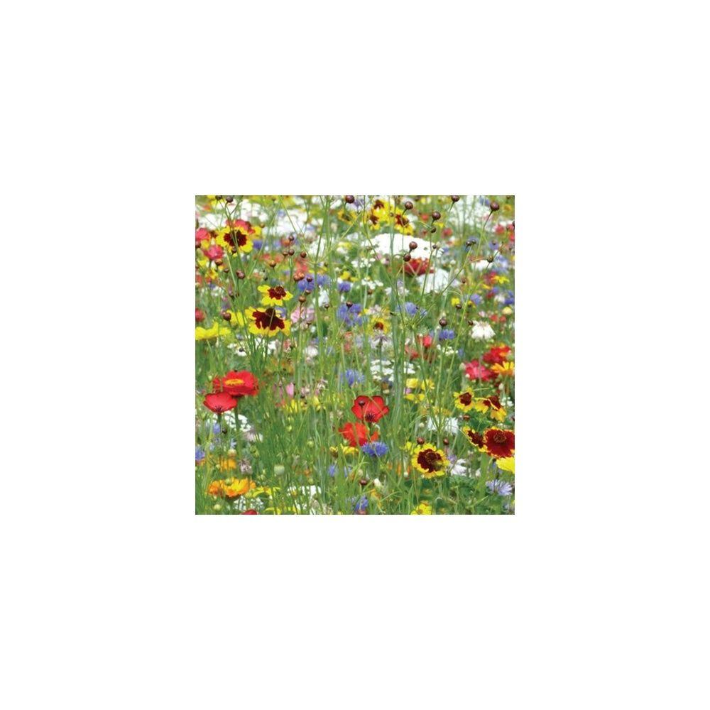 prairie fleurie les amis du jardin je lutte contre les pucerons 3m bo te de 16g gamm vert. Black Bedroom Furniture Sets. Home Design Ideas