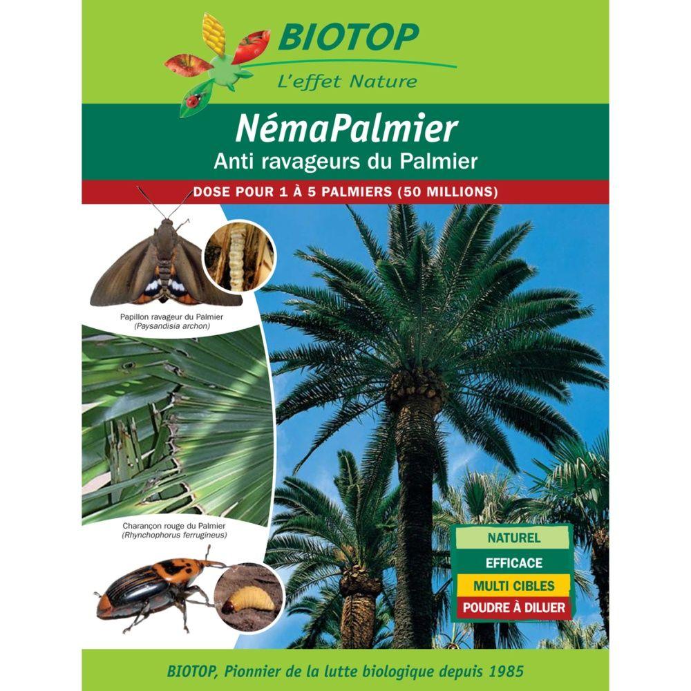 Néma-Palmier 50 millions contre ravageurs du palmier – Biotop