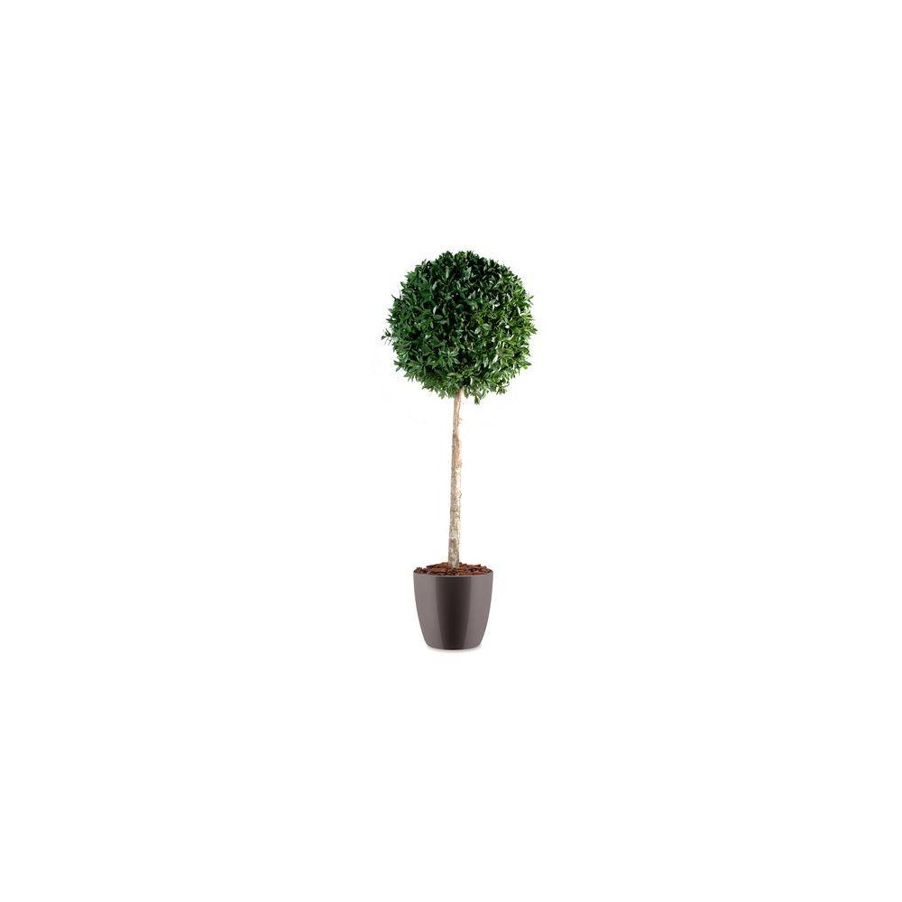 Laurier boule tige H150cm (tronc naturel, feuillage artificiel) pot elho gris