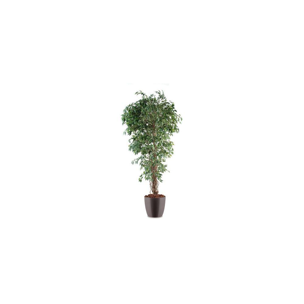 Ficus lianes petites feuilles H180cm (tronc naturel, feuillage artificiel) pot elho gris