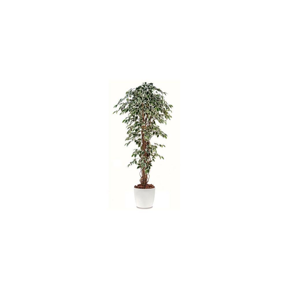 Ficus lianes grandes feuilles panaché H180cm (tronc naturel, feuillage artificiel) pot elho blanc