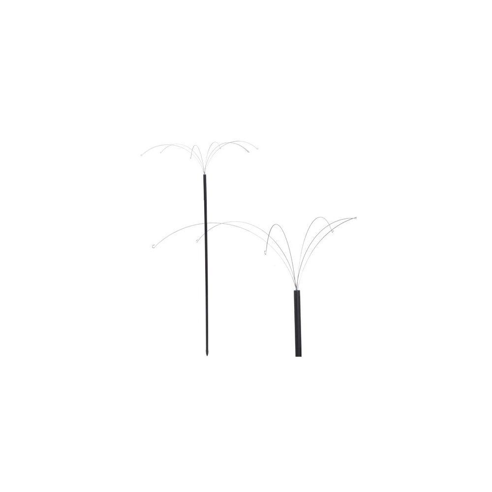 Palmier sur pied graisse x6 – Néodis