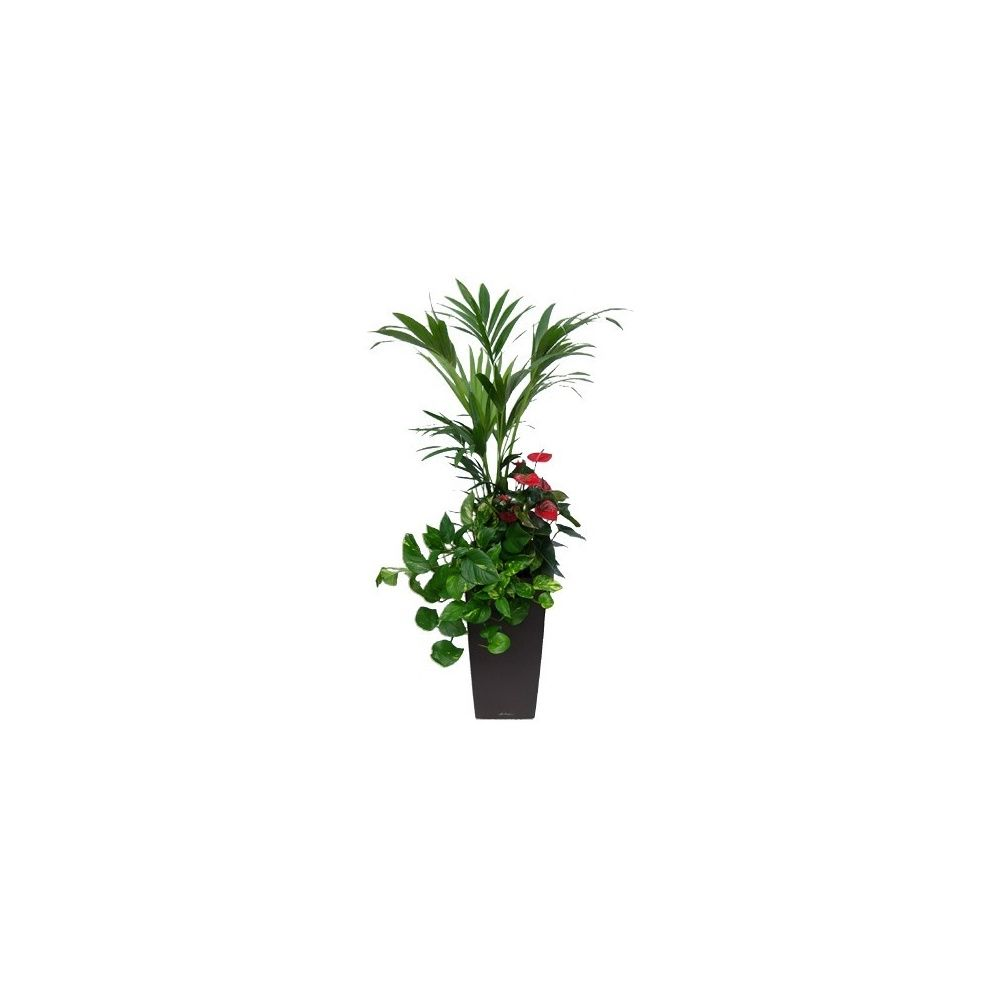 Composition 3 plantes rempoté dans pot Lechuza Cubico Premium 30 anthracite métallisé