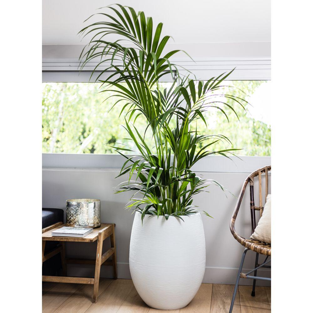 pot eda egg graphit r sine 50 h60 cm blanc gamm vert. Black Bedroom Furniture Sets. Home Design Ideas