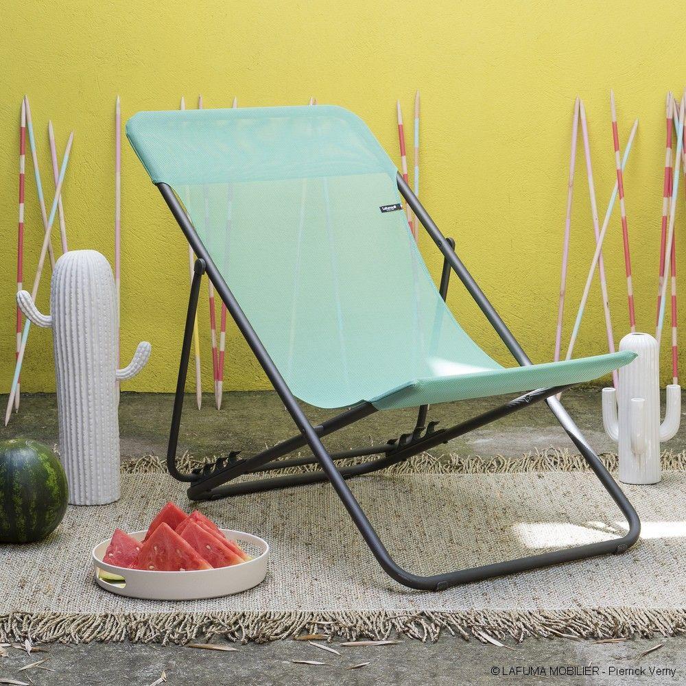 acanthe semis plantation floraison entretien. Black Bedroom Furniture Sets. Home Design Ideas
