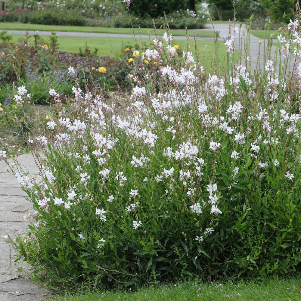Kit de vivaces 12 mois de fleurs lot de 15 godets de 7 for Plantes et fleurs vivaces
