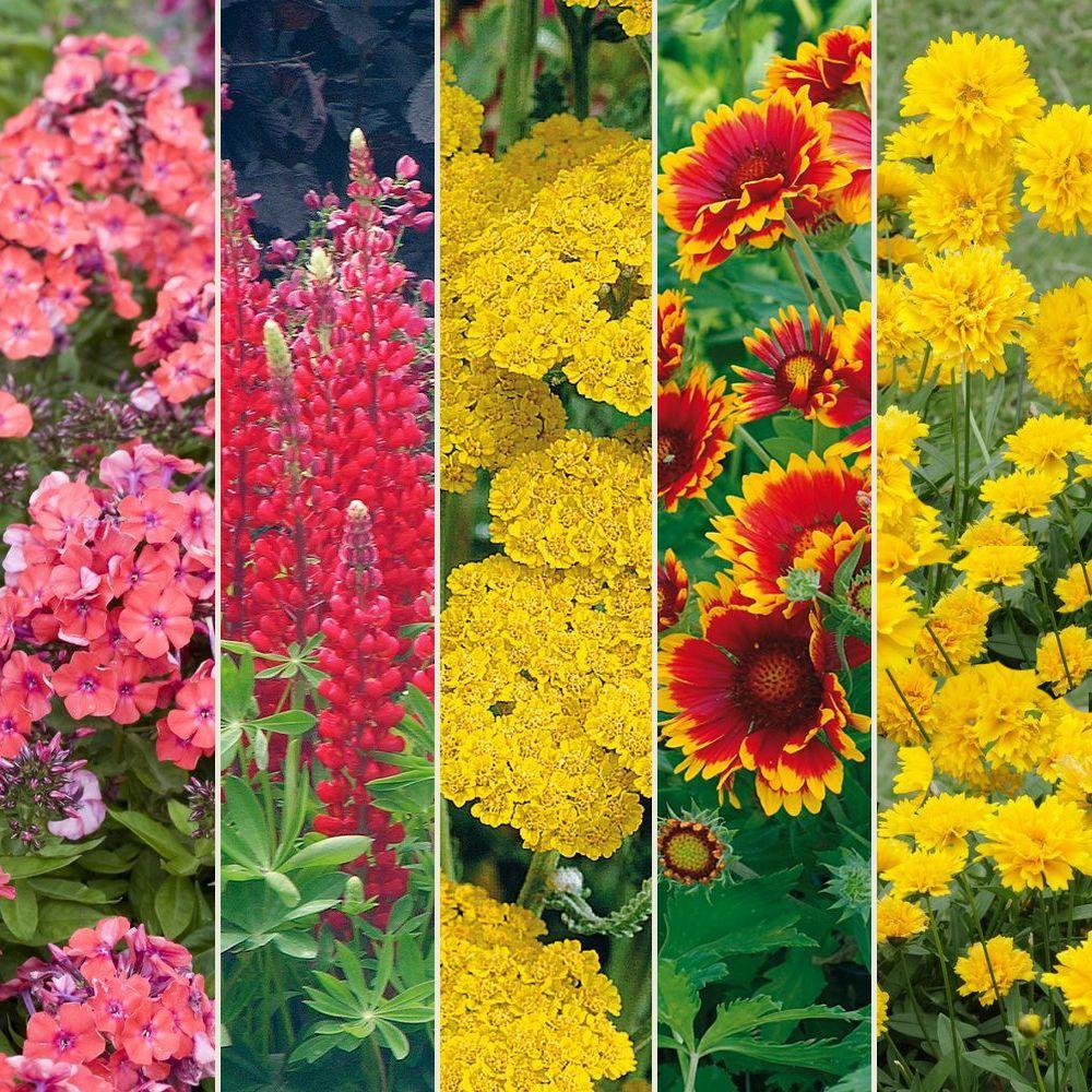 Kit de vivaces : Bouquet couleur chaude Lot de 15 godets de 7 cm ...