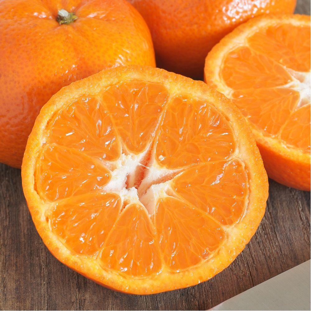 mandarinier satsuma bio en pot de 3 litres gamm vert. Black Bedroom Furniture Sets. Home Design Ideas