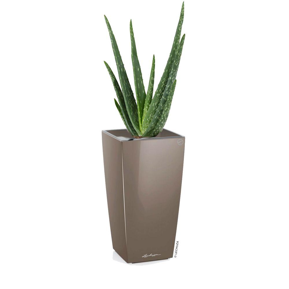Aloe vera rempoté dans pot Lechuza MaxiCubi taupe brillant