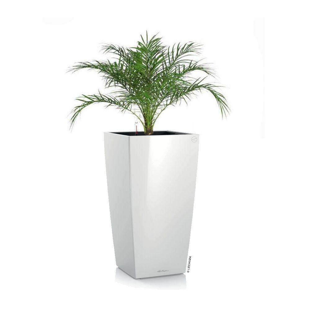 phoenix roebellini rempot dans pot lechuza cubico color 30 blanc hauteur totale 100 110 cm. Black Bedroom Furniture Sets. Home Design Ideas