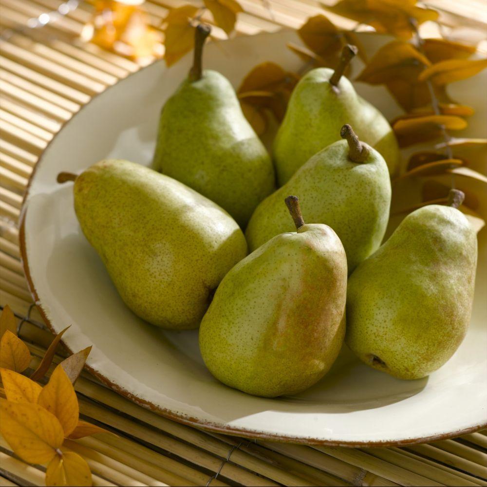 Poirier Fertilia delbard ® – delwilmor – Fruitier Georges Delbard