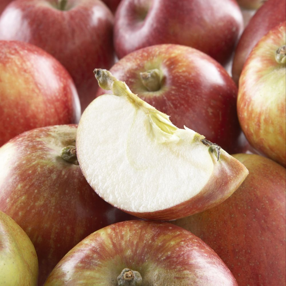 Pommier Colonnaire Azay le rideau ® – delwibo – Fruitier Georges Delbard